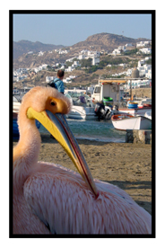Pink Pelican in Mykonos